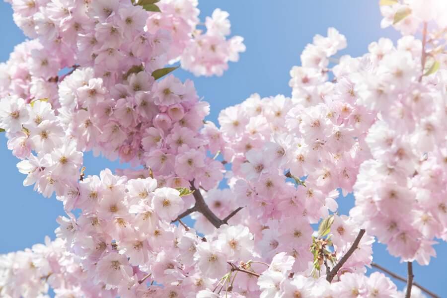 Au Japon : l'Ikigai pour trouver son épanouissement