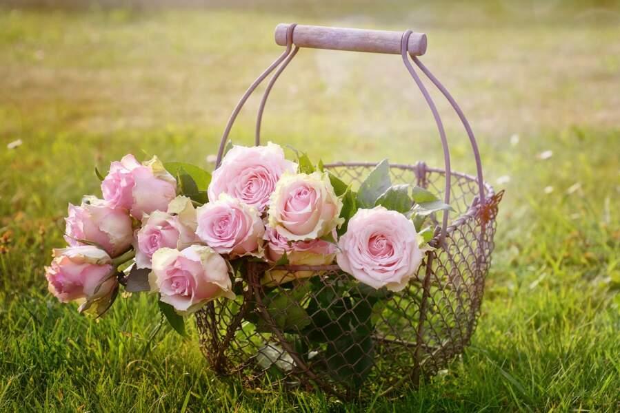 La rose rose pour la Balance du deuxième décan
