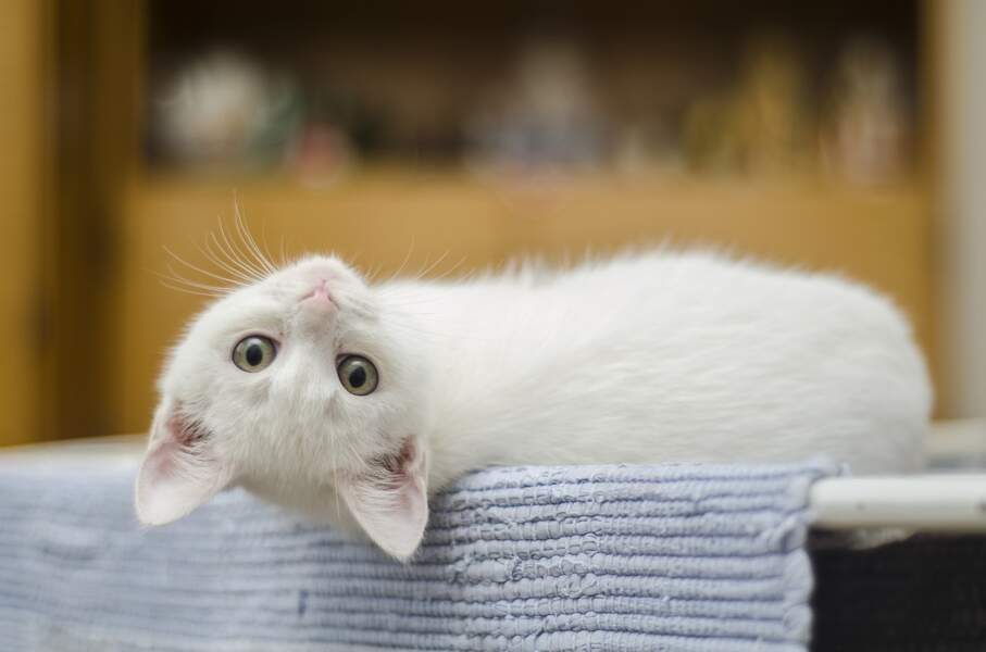 12. Kitty