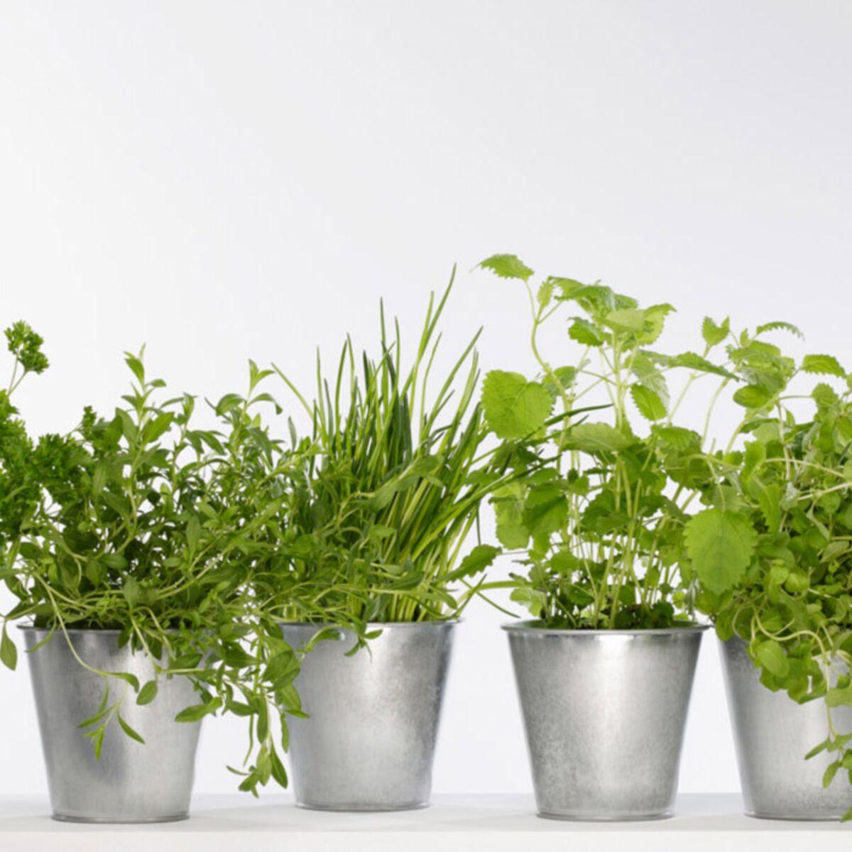 Plantes Aromatiques Sur Terrasse mon mini-jardin de plantes aromatiques : femme actuelle le mag