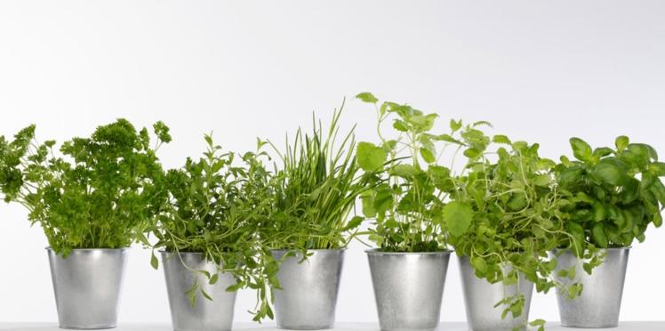 Mon mini-jardin de plantes aromatiques