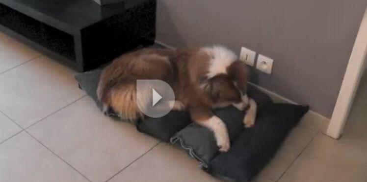 Un coussin pour chien avec des vieux jeans