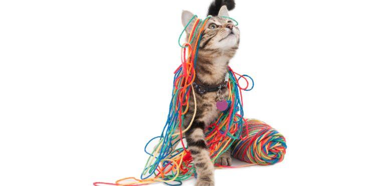 Gratuit : nos leçons de tricot en vidéo