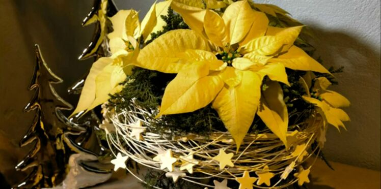 Comment faire des bouquets de poinsettia
