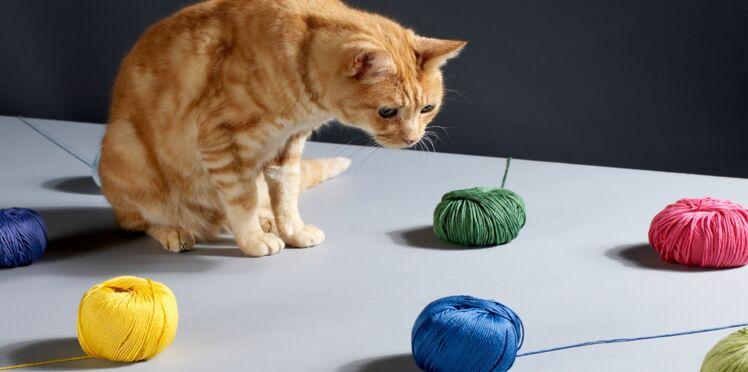 Tricot : réaliser des rayures de couleur