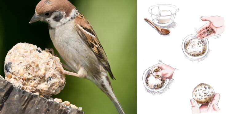 Des boules de graisse pour oiseaux