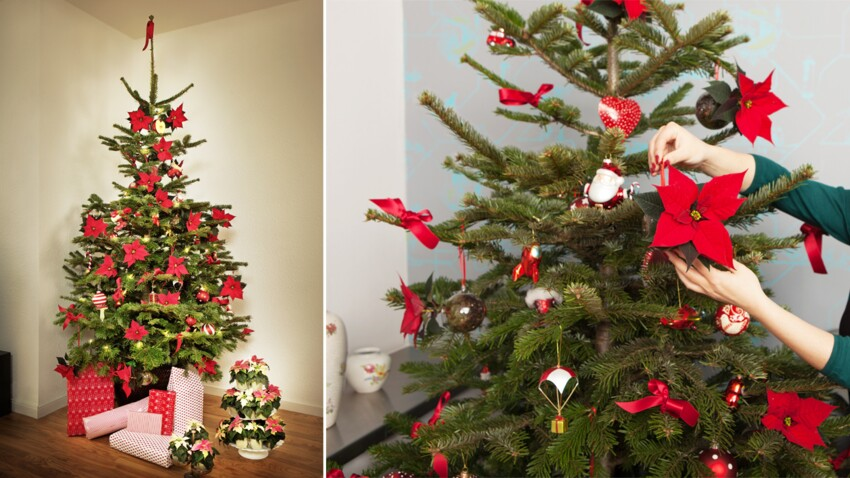 Unique, la fleur de Noël pour décorer le sapin
