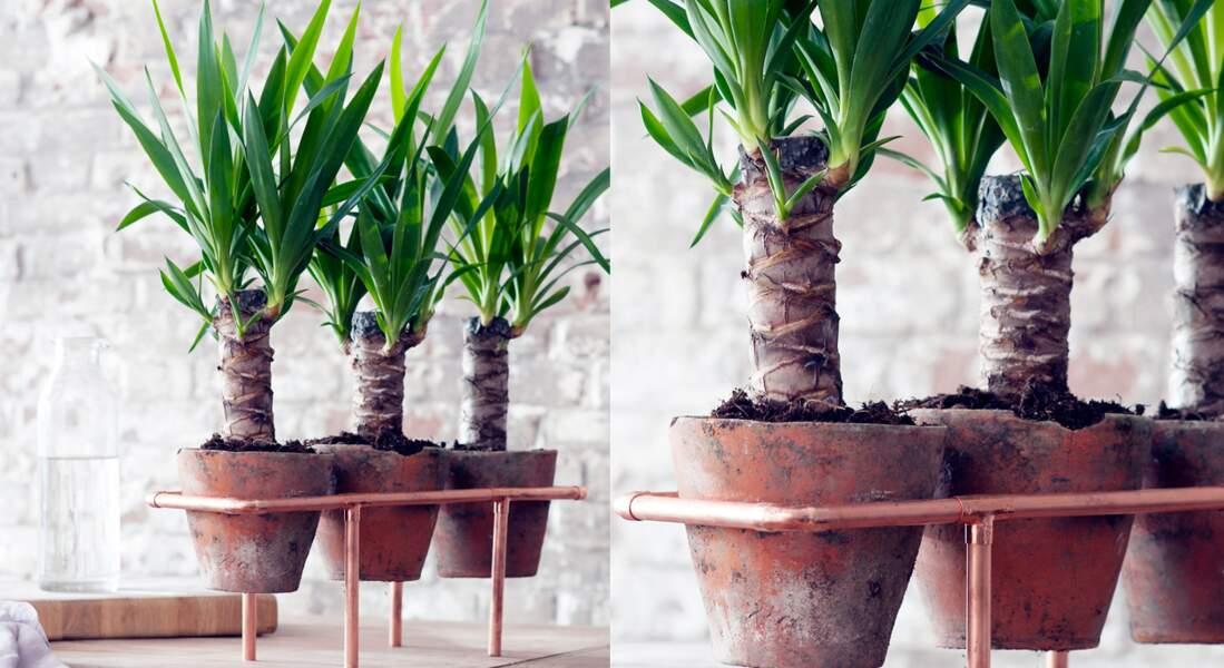 Plante d'intérieur : des yuccas sur un support cuivre