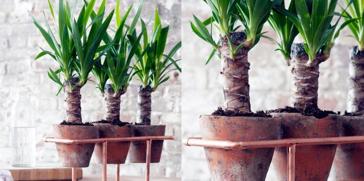 Un support en cuivre design pour yucca