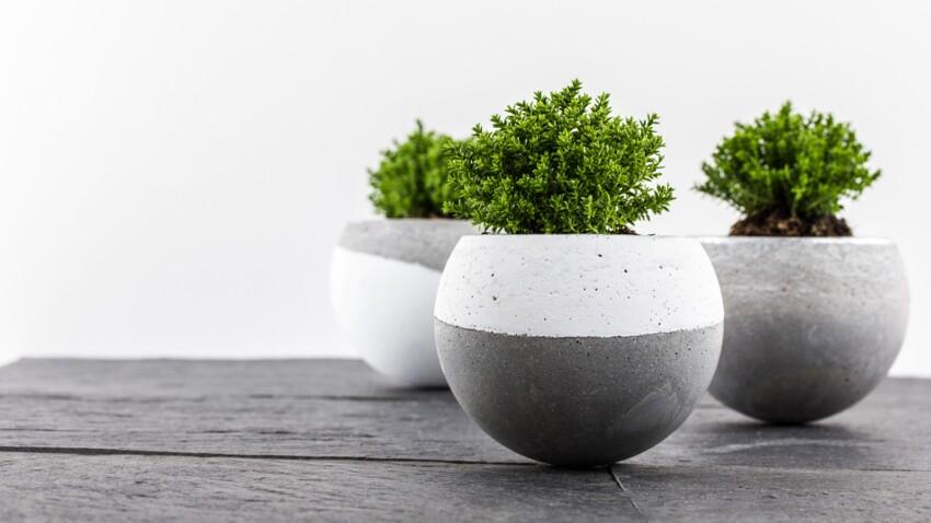 Du béton dans la maison : des pots design