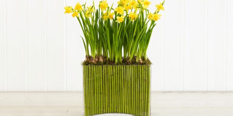 Art floral : bulbes de narcisses et branches de cornouiller