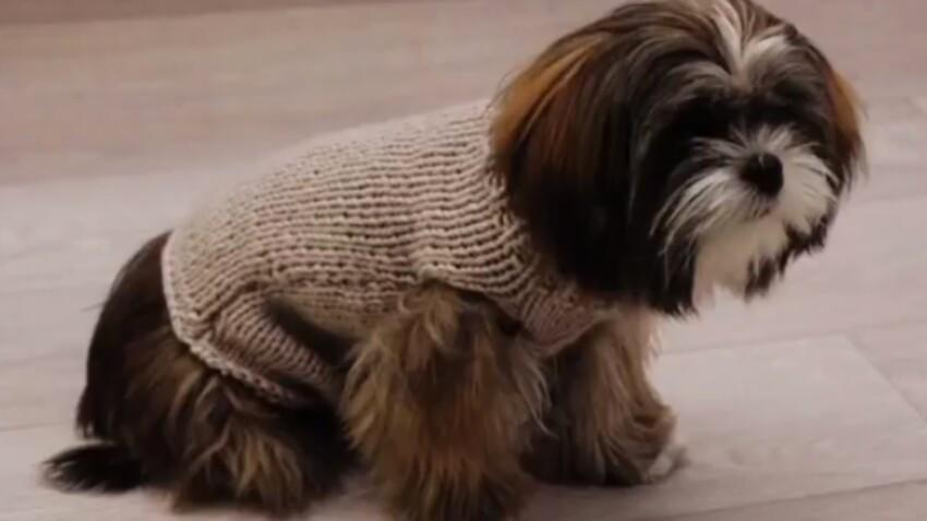 Un manteau pour chien au point jersey 2