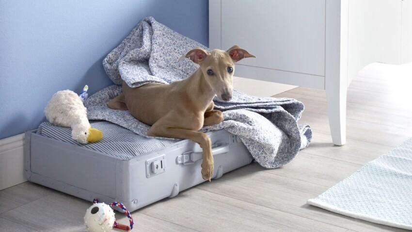 Facile : un panier pour chien dans une valise