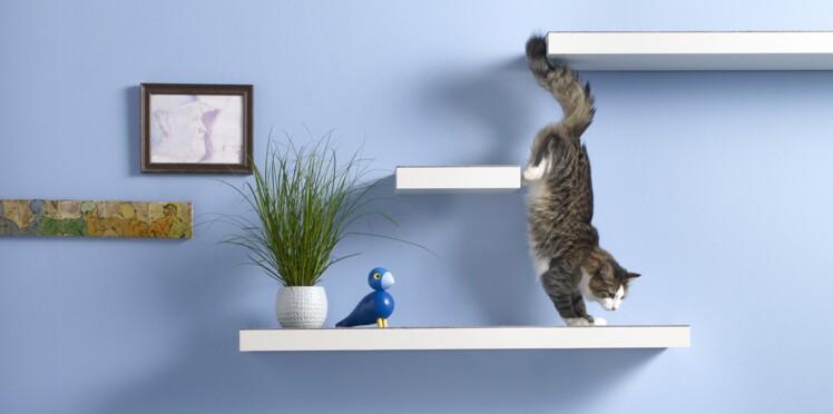 Fabriquer un arbre à chat avec des étagères