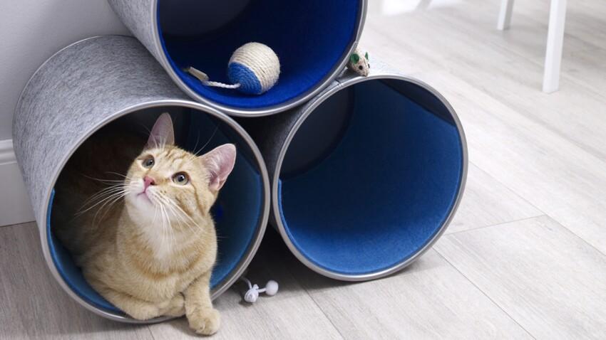 Comment créer une cachette pour chat avec des bidons ?