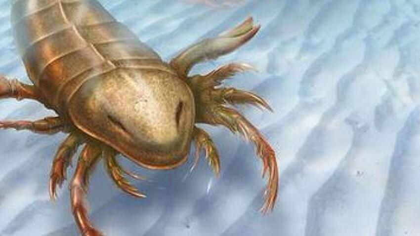 Un nouveau scorpion ascendant préhistorique