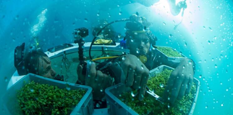 Ils font pousser un potager sous la mer !