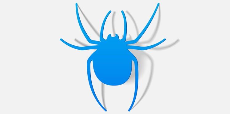L'araignée qui fait grimper aux rideaux