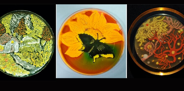 De si jolies bactéries…