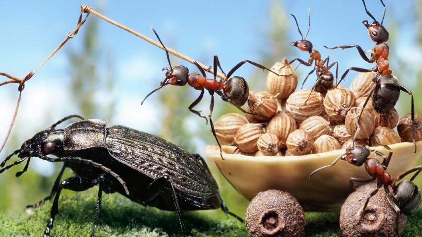 Les fourmis, pas si travailleuses !