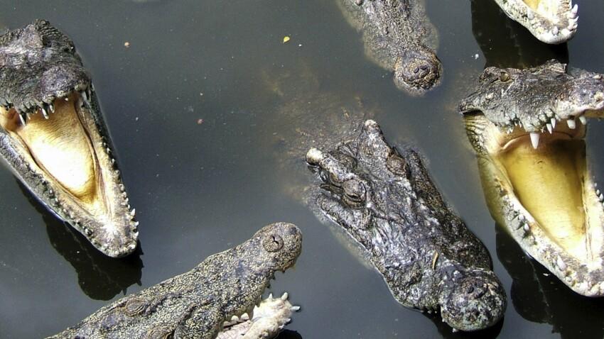 Ces matons ont les crocs