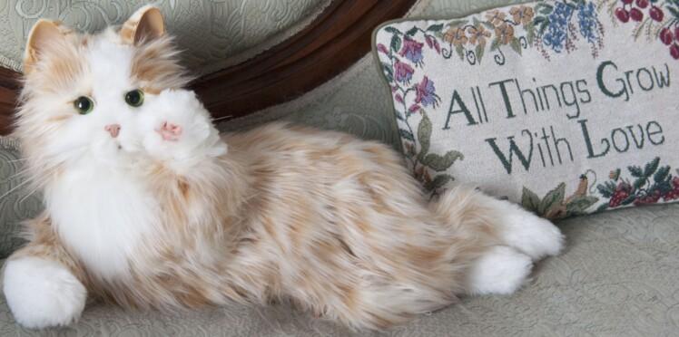 Un chat qui ronronne sur commande