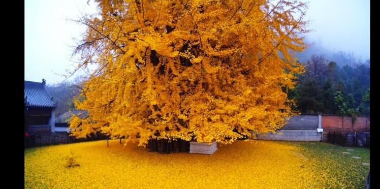 Joli tapis d'automne