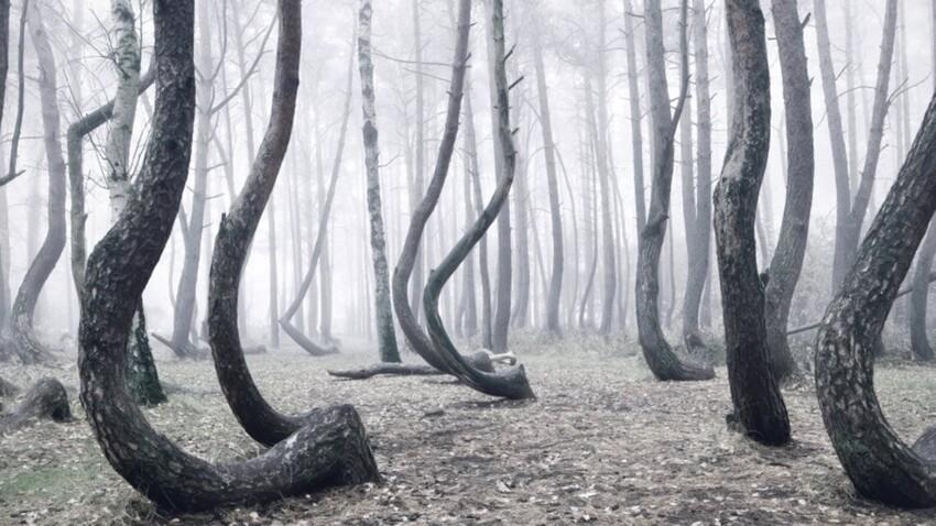 Des pins mutants
