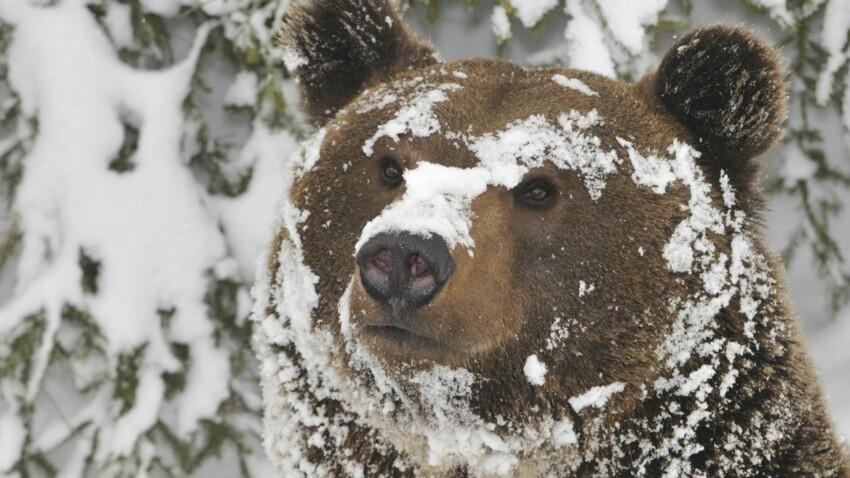 Petit ours brun, le nouveau Monsieur Météo