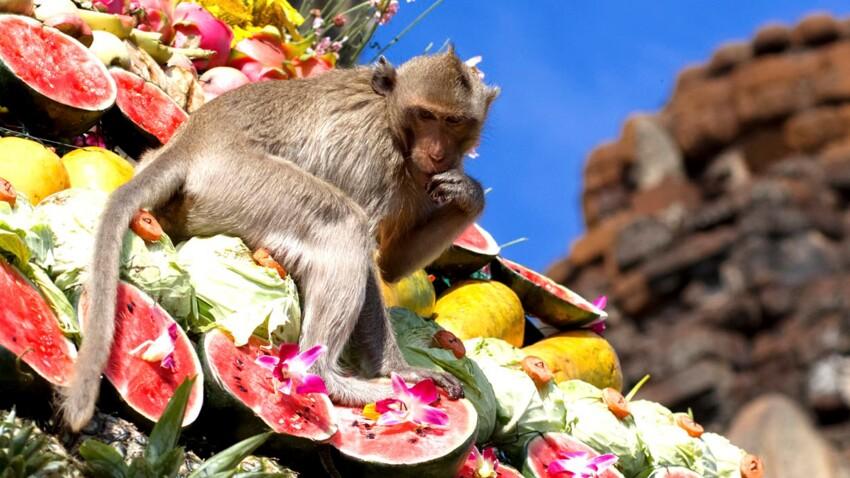 Un banquet de singes en hiver