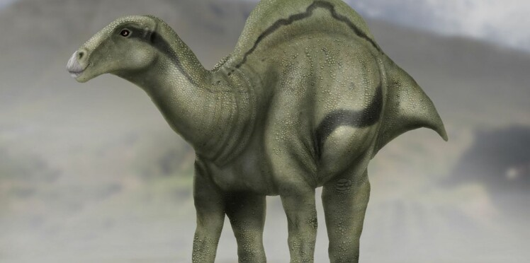 Dans la famille dinosaure, je voudrais... le petit dernier
