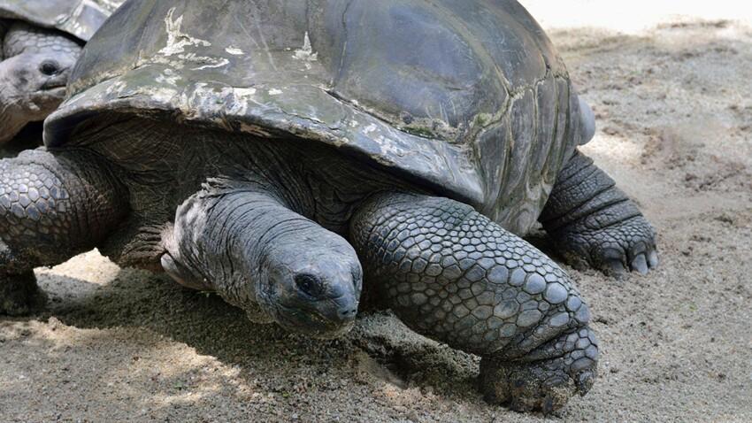 Aux Galápagos, des tortues surgies du passé