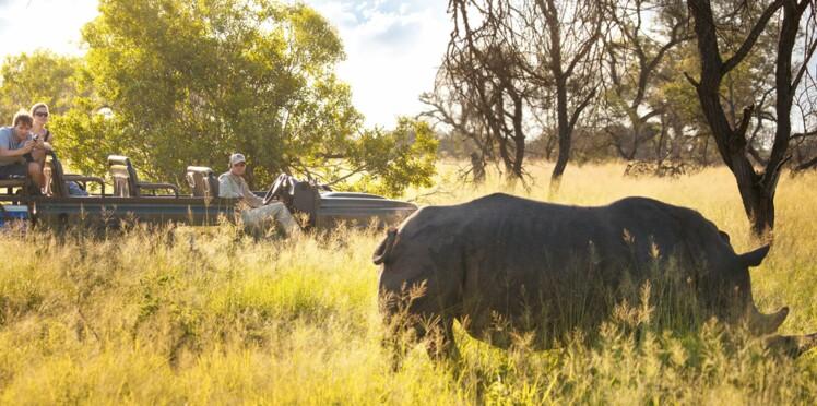 Afrique du sud : safari magique au Kruger