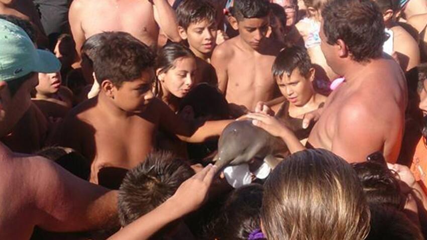 Un bébé dauphin meurt pour quelques selfies
