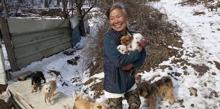 L'émouvant combat d'une retraitée pour les chiens errants
