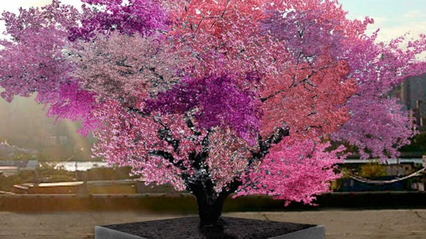 Incroyable : 40 fruits sur un seul arbre!