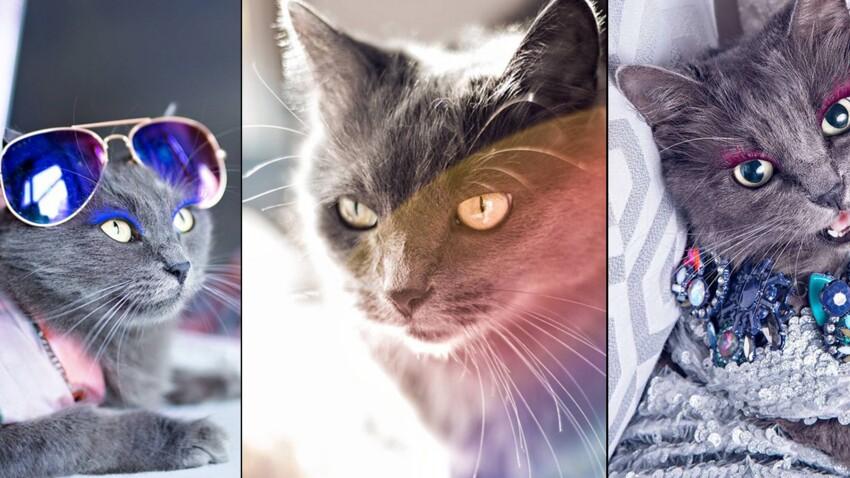 Les chats, stars du web, pour le meilleur… et pour le pire