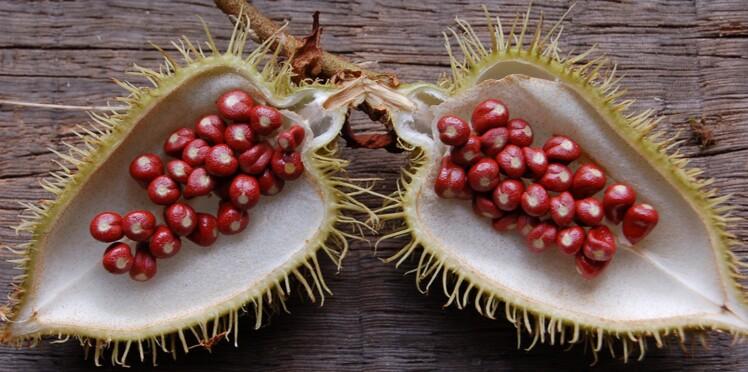 Un fruit exotique pour lutter contre le cancer de la peau ?