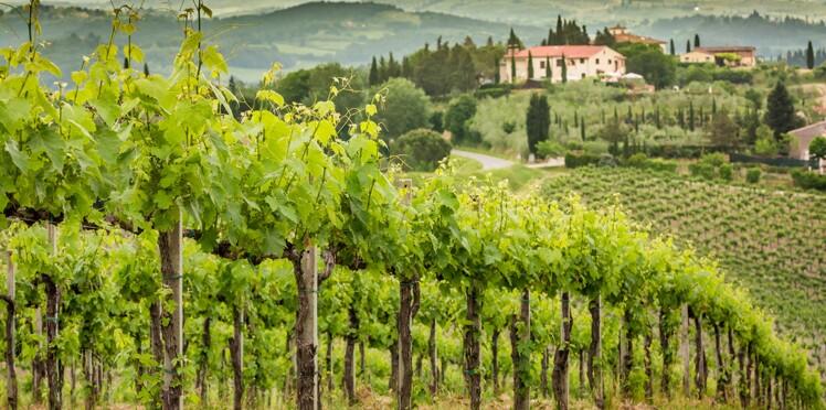 Vin et tourisme : suivez le guide