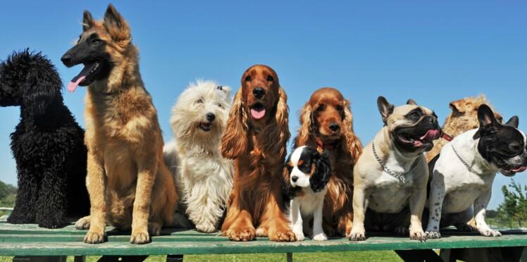 Avez-vous le même âge que votre chien ?