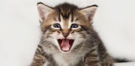 blanc chatte lesbiennes