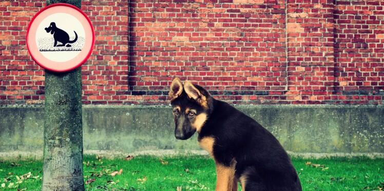 ADN : vos chiens pistés par leurs crottes !
