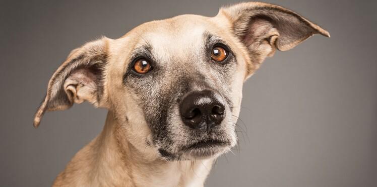 Détecter le cancer du sein grâce au flair des chiens ?
