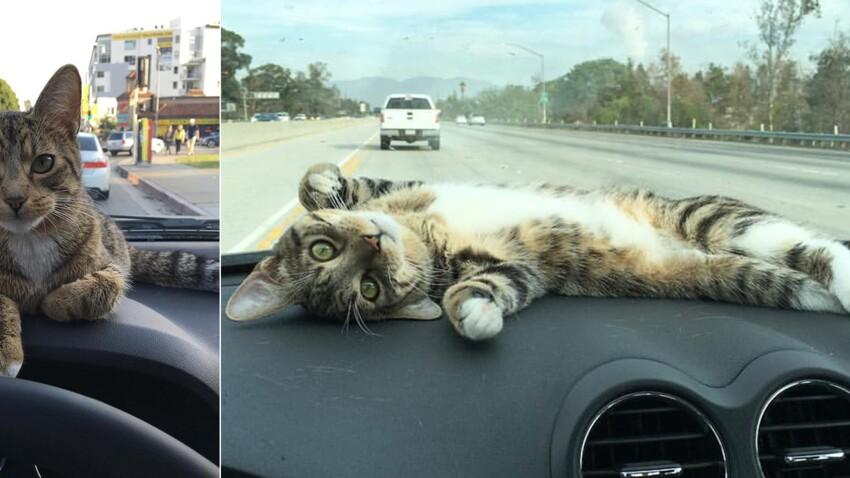 """Ce chat """"tableau de bord"""" est vraiment trop mignon !"""