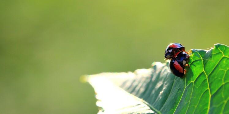 5 astuces pour jardiner bio
