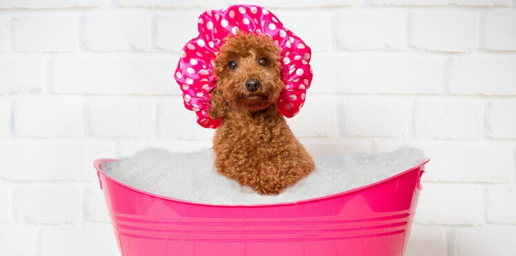 Et maintenant une station de lavage… pour chien !