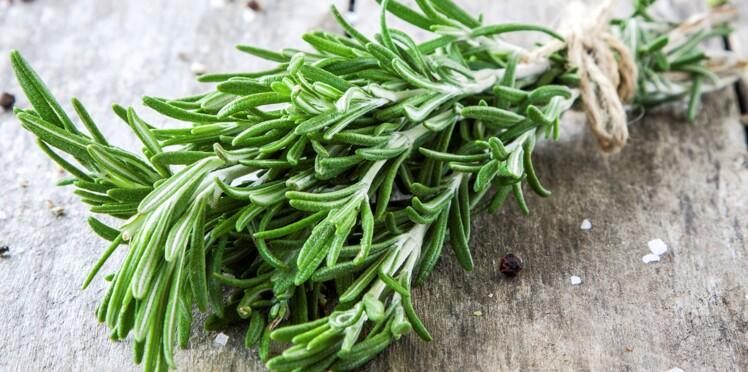 Cette plante peut vous faire vivre 100 ans !