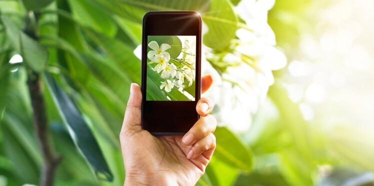 PlantNet : magique, cette appli reconnaît les plantes !