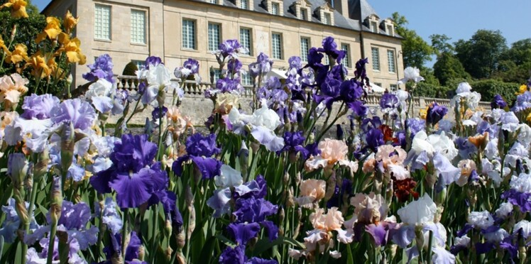 10 fleurs à admirer dans les parcs et jardins en mai : Femme ...
