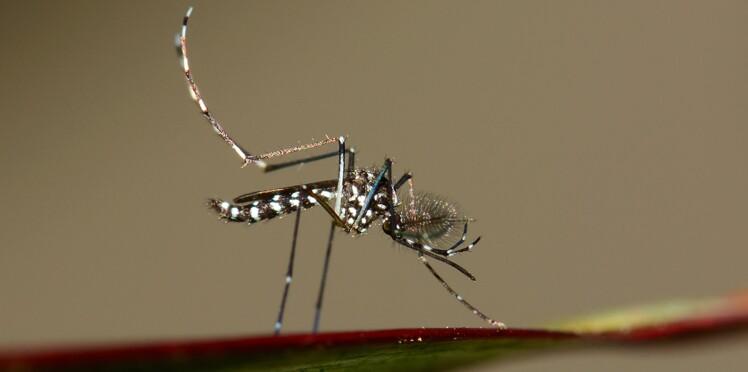 Moustique tigre : une prolifération inquiétante en France